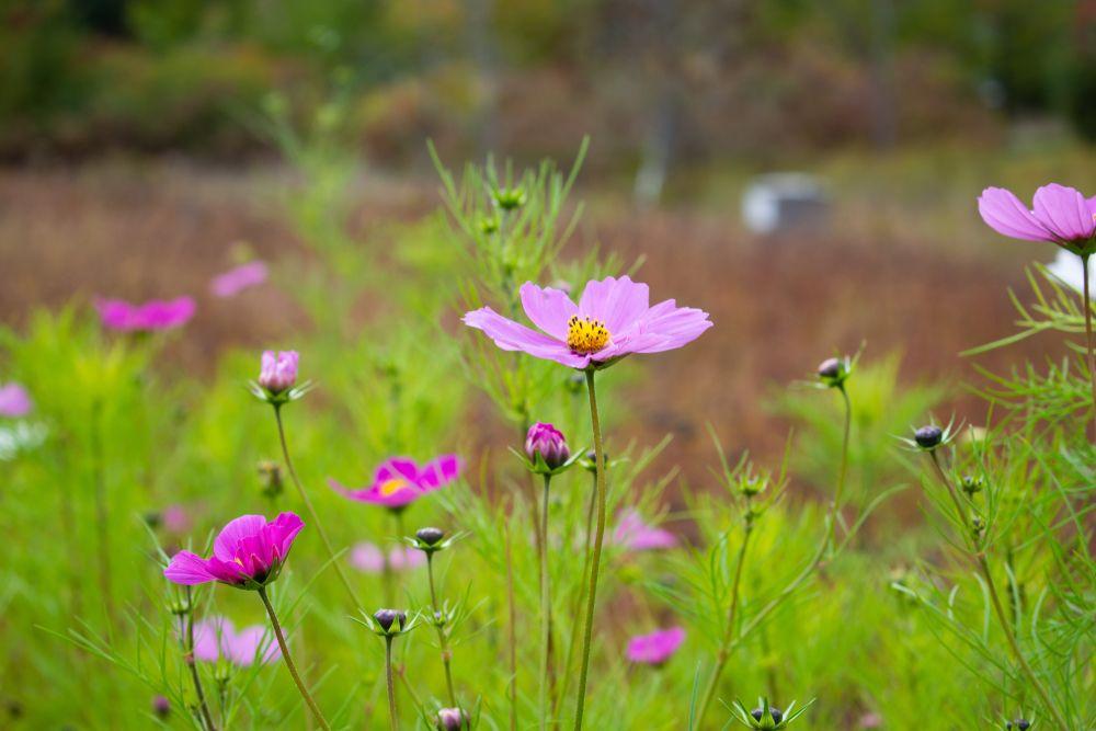 Flower in Viles Arboretum