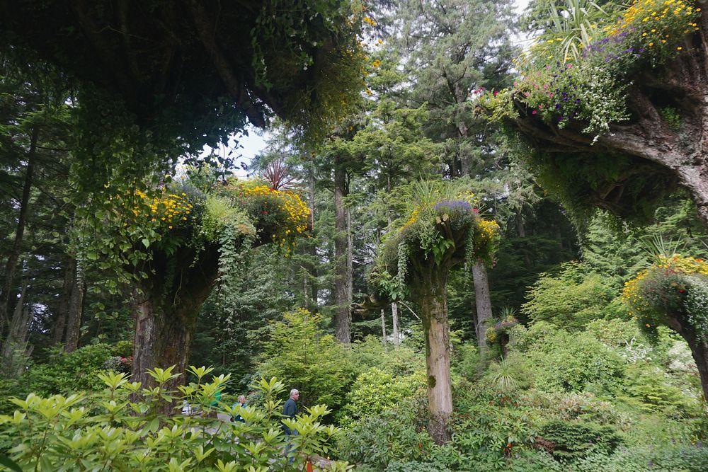 Glacier Garden Rainforests