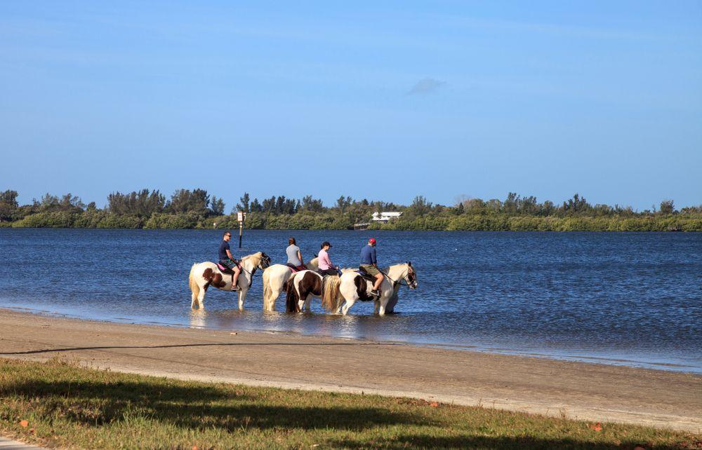 Horseback Ride in Anna Maria Island