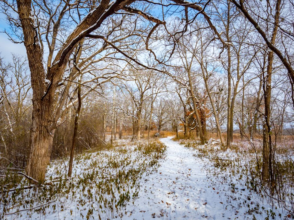 Snow covered trail at Quarry Hill Nature Centre