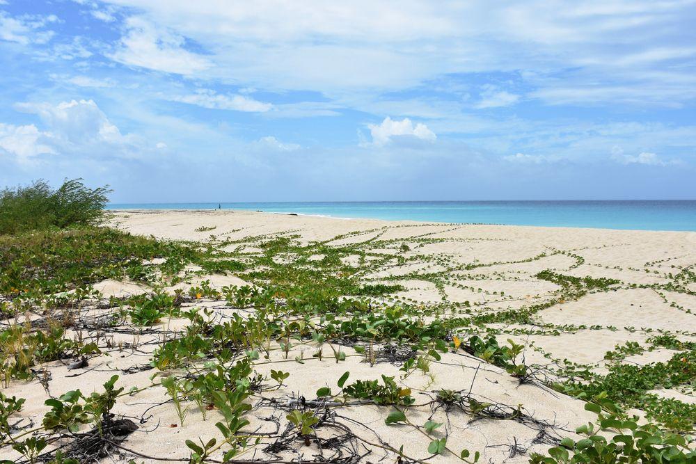 Sandy Point Refuge