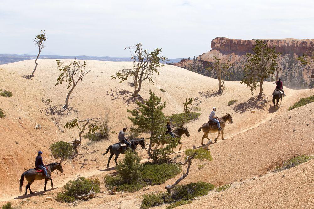 Horseback riding in Bryce Canyon