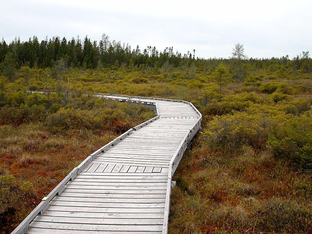 Orono Bog Walk in Bangor, Maine