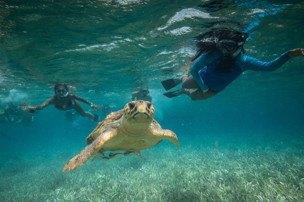 Snorkeling with turtles in Hol Chan, Belize