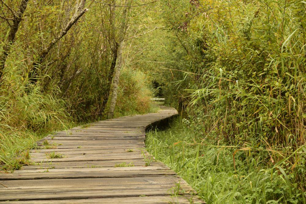 Footbridge in Millersylvania State Park
