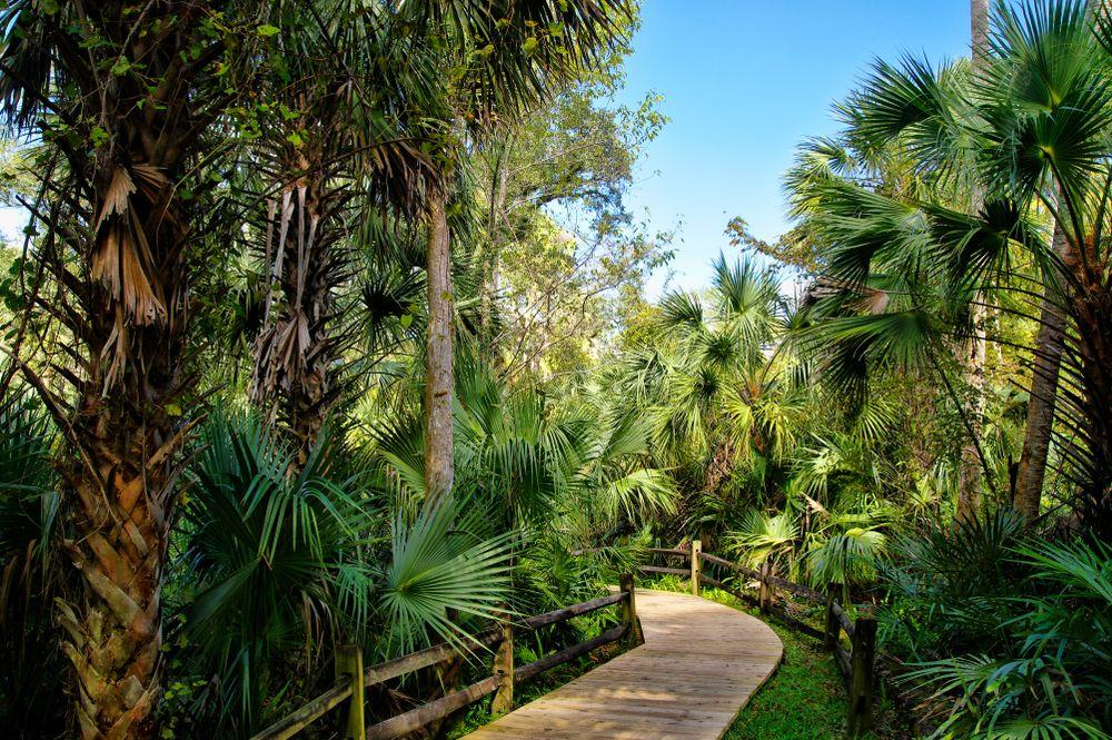 Boardwalk in Ocala National Forest