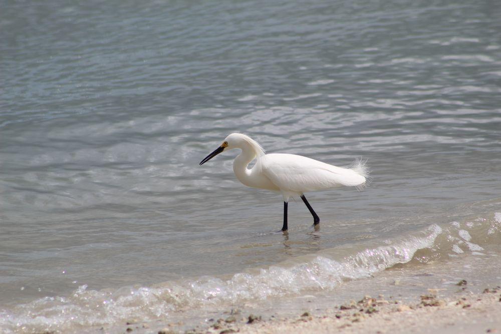 Bird on Pepper Park Beach