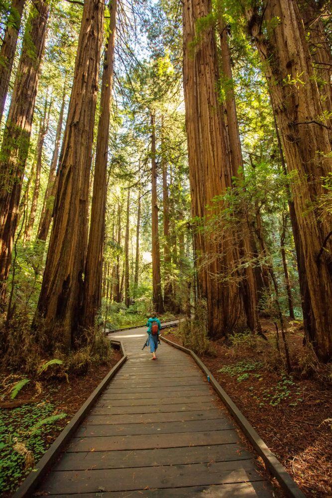 Redwood National Park, United States