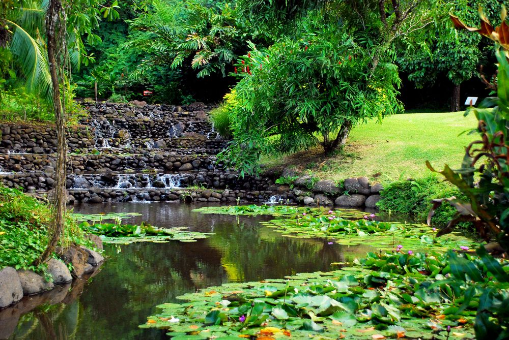 Lake in Vaipahi Gardens