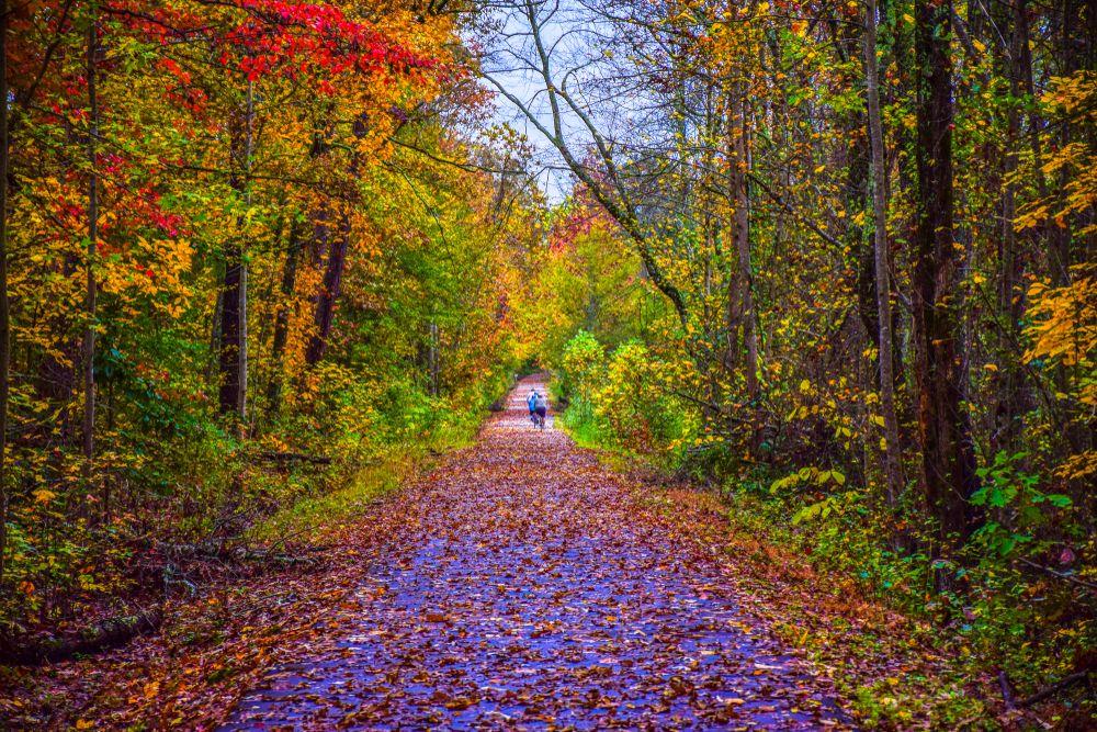 Greenville Swamp Rabbit Trail
