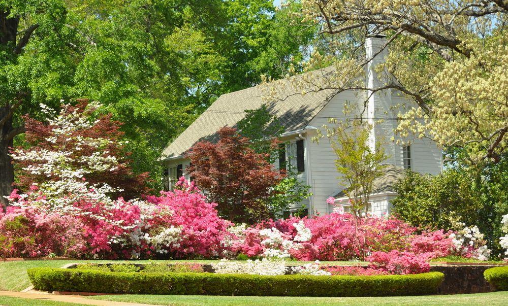 Tyler's Azaleas bloom trail