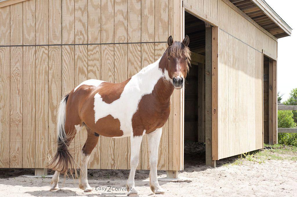 Pony pens in Ocracoke