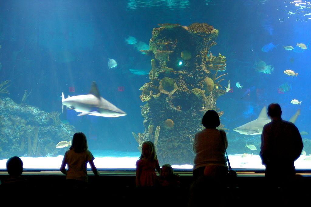 Newport Aquarium in KY.