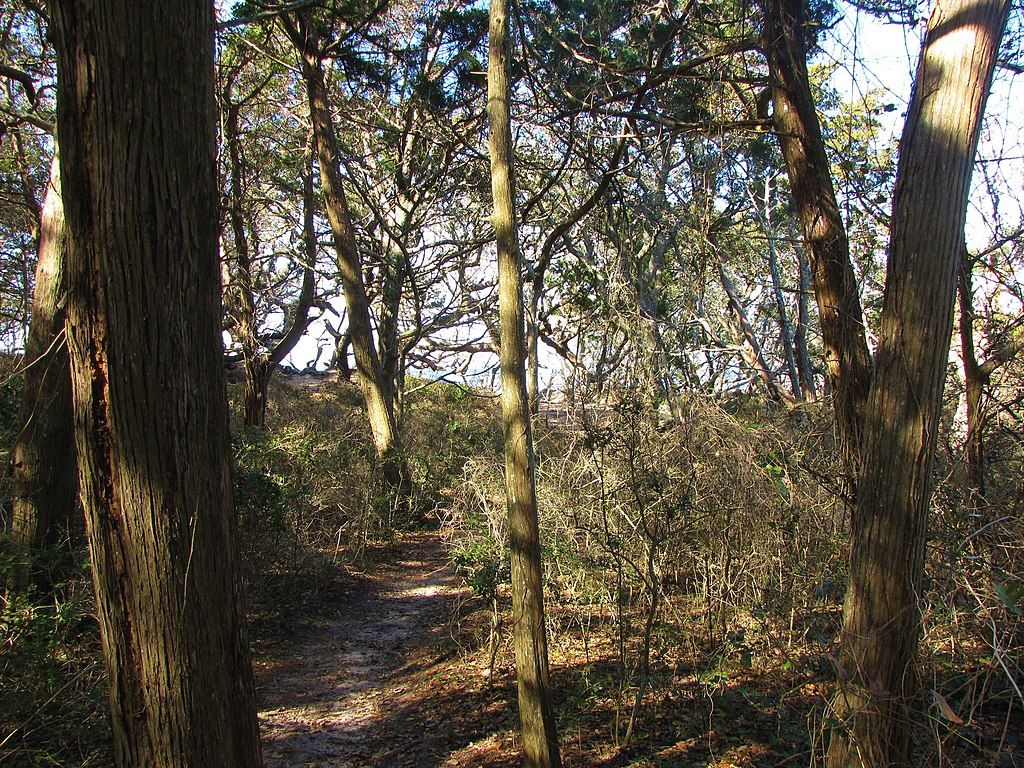 Woods in Springer's Point Nature Preserve