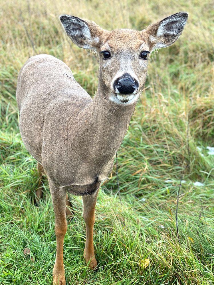 Deer in Chequamegon-Nicolet National Forest