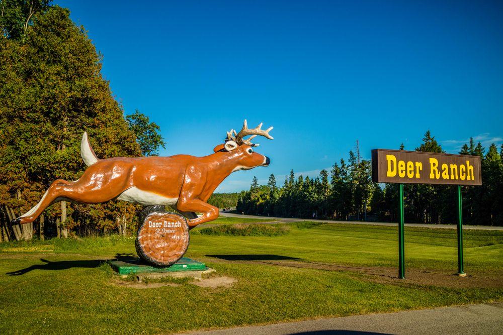 Deer Ranch St.Ignace