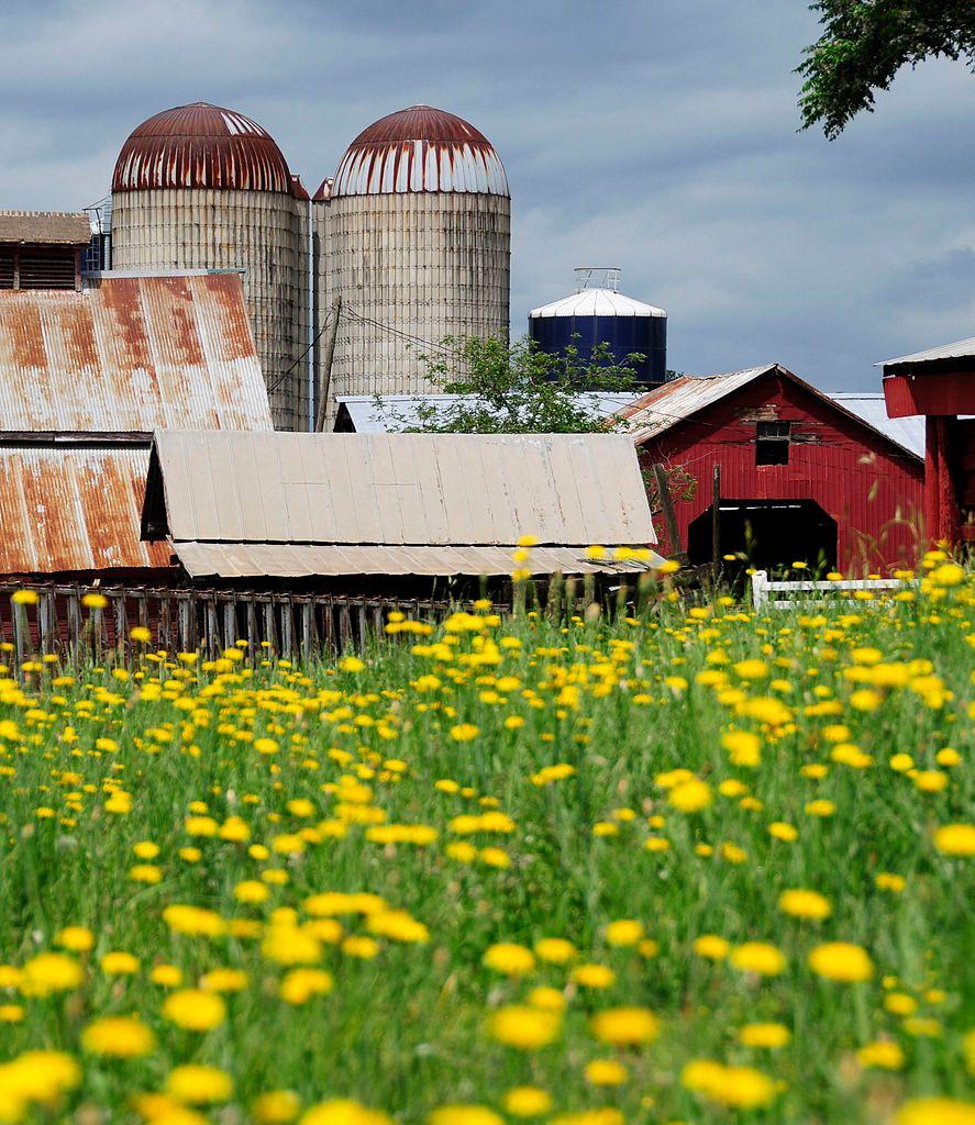 Denver Downs Farm