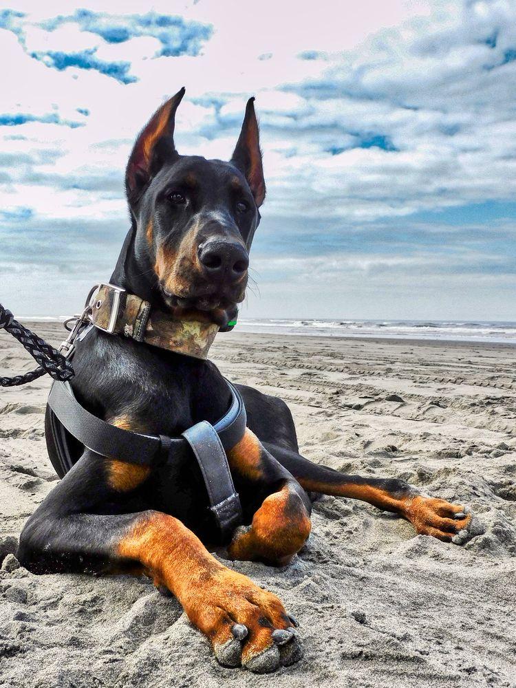Dog in Long Beach