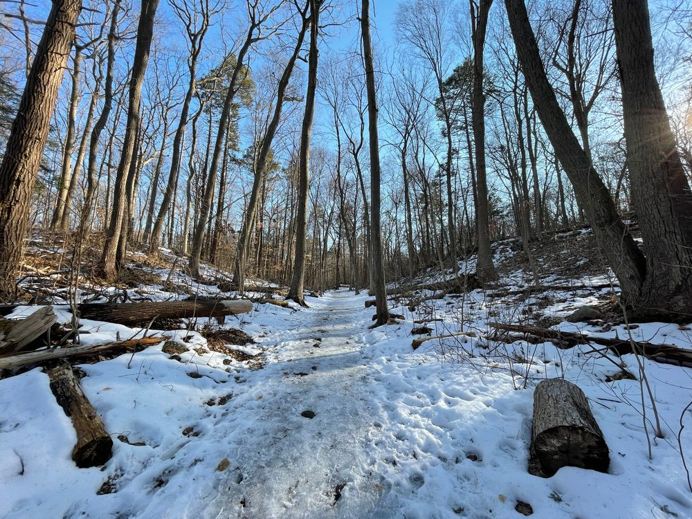 Ferncliff Forest