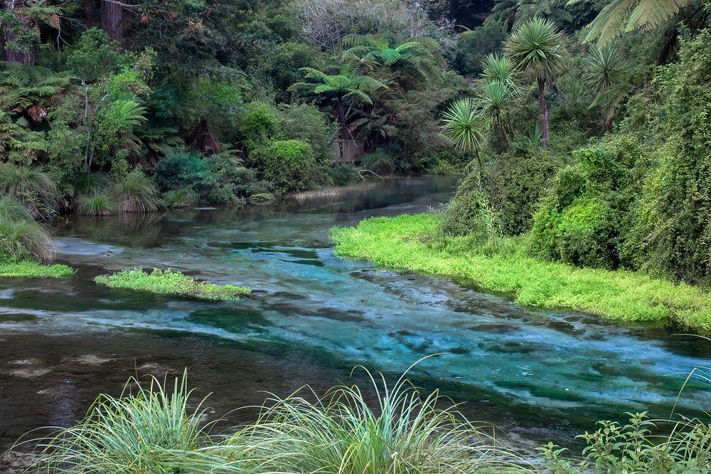 Hamurana Springs Nature Reserve