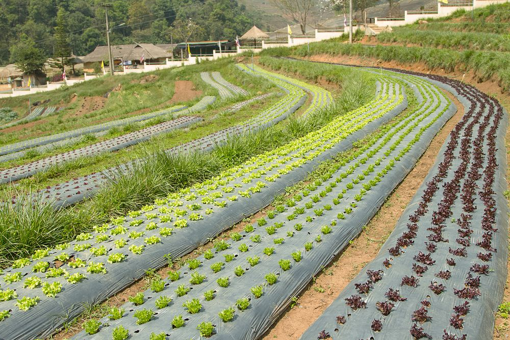 Organic field in Highlands Biological Station