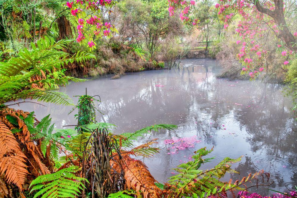 Mud Pool in Kuiaru Park