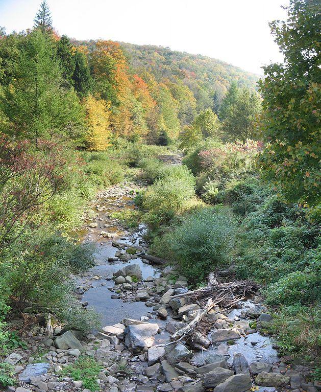 Old Loggers Path