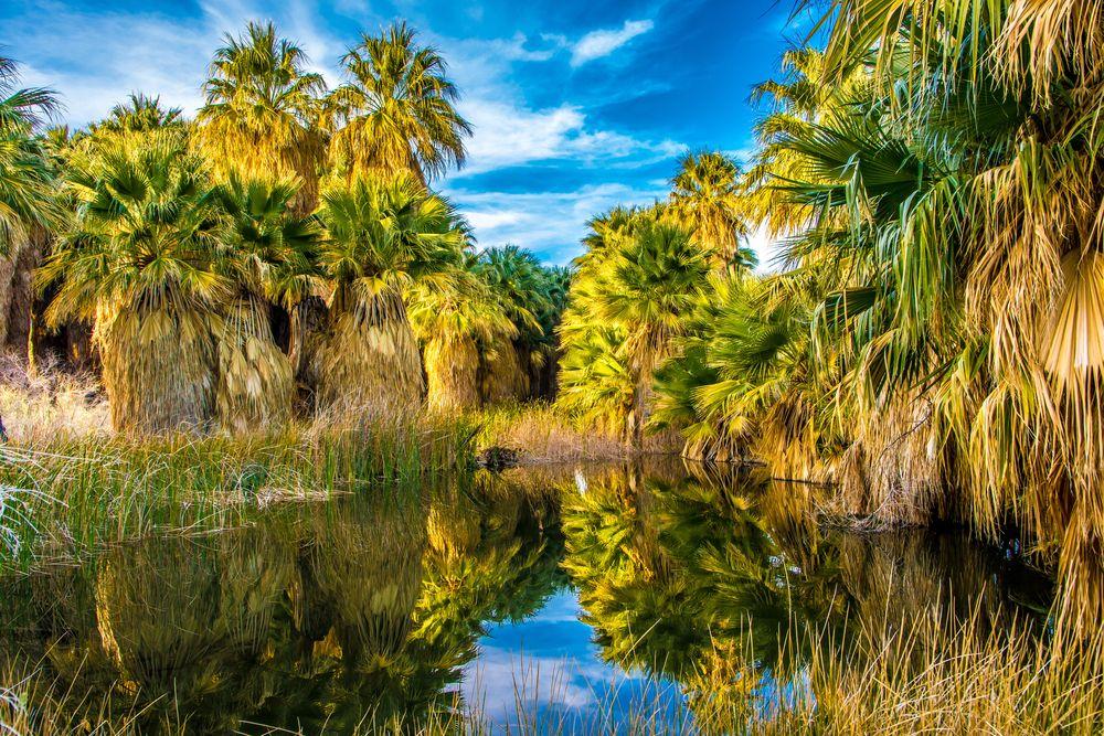 Thousand Palms Oasis Preserve