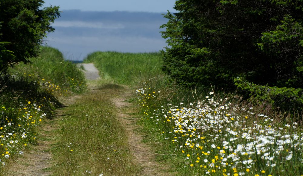 Trail to Benson Beach in Cape Disappointment