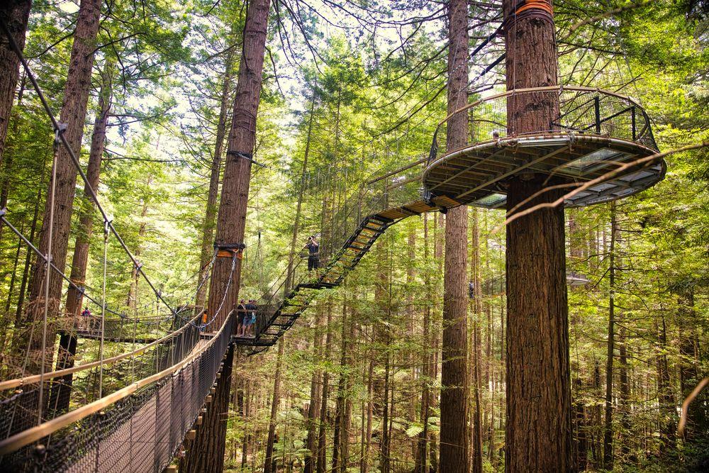 Tree top walk in Whakarewarewa Redwoods