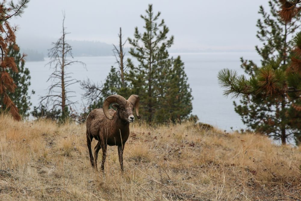 Wild Horse Island in Montana