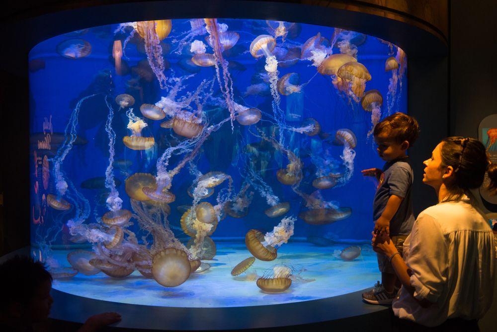 The aquarium in Aquarium of the Pacific