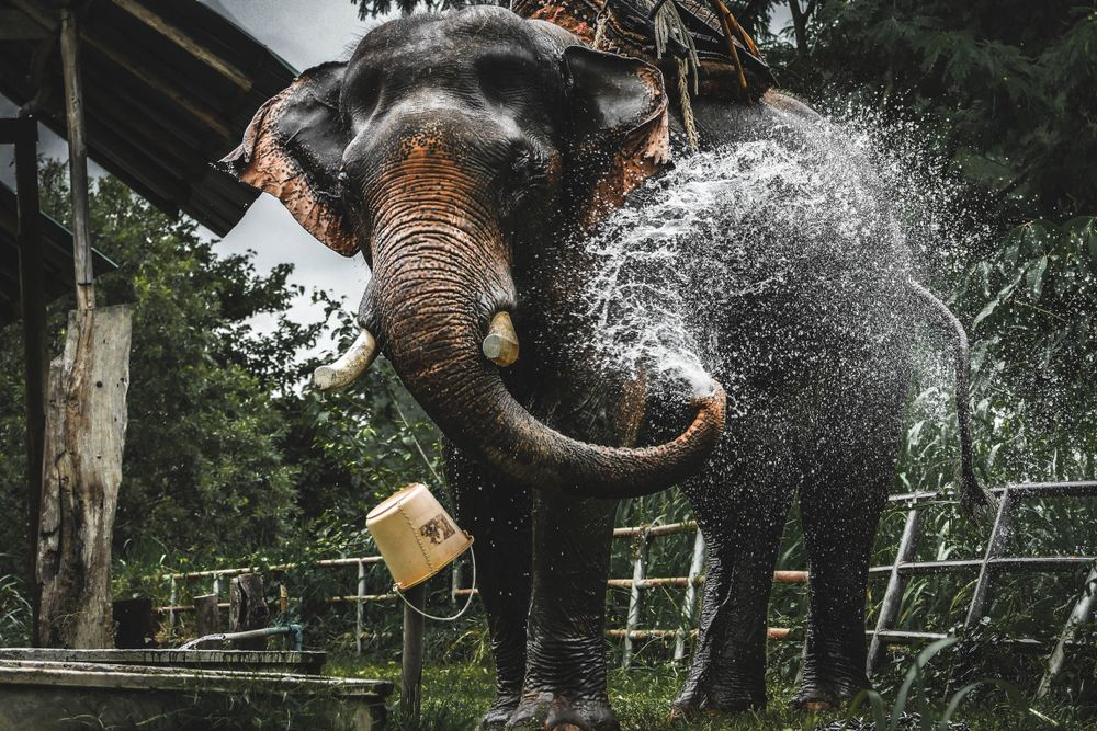 Elephant Valley in Chiang Rai, Thailand