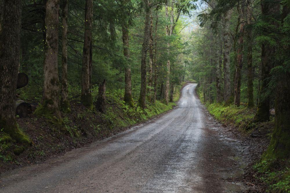 A gravel road in Cades Cove