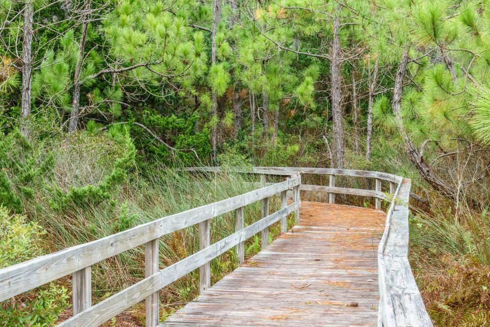 Hammock Hills Nature Trails in Ocracoke