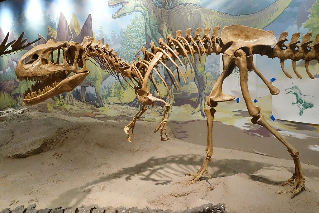 Skeleton of a Dinosaur in Utah Field House of Natural History State Park
