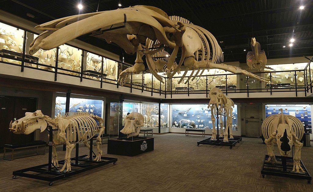 Skeletal Structures at Museum of Osteology