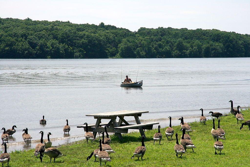 Ducks at Nockamixon State Park