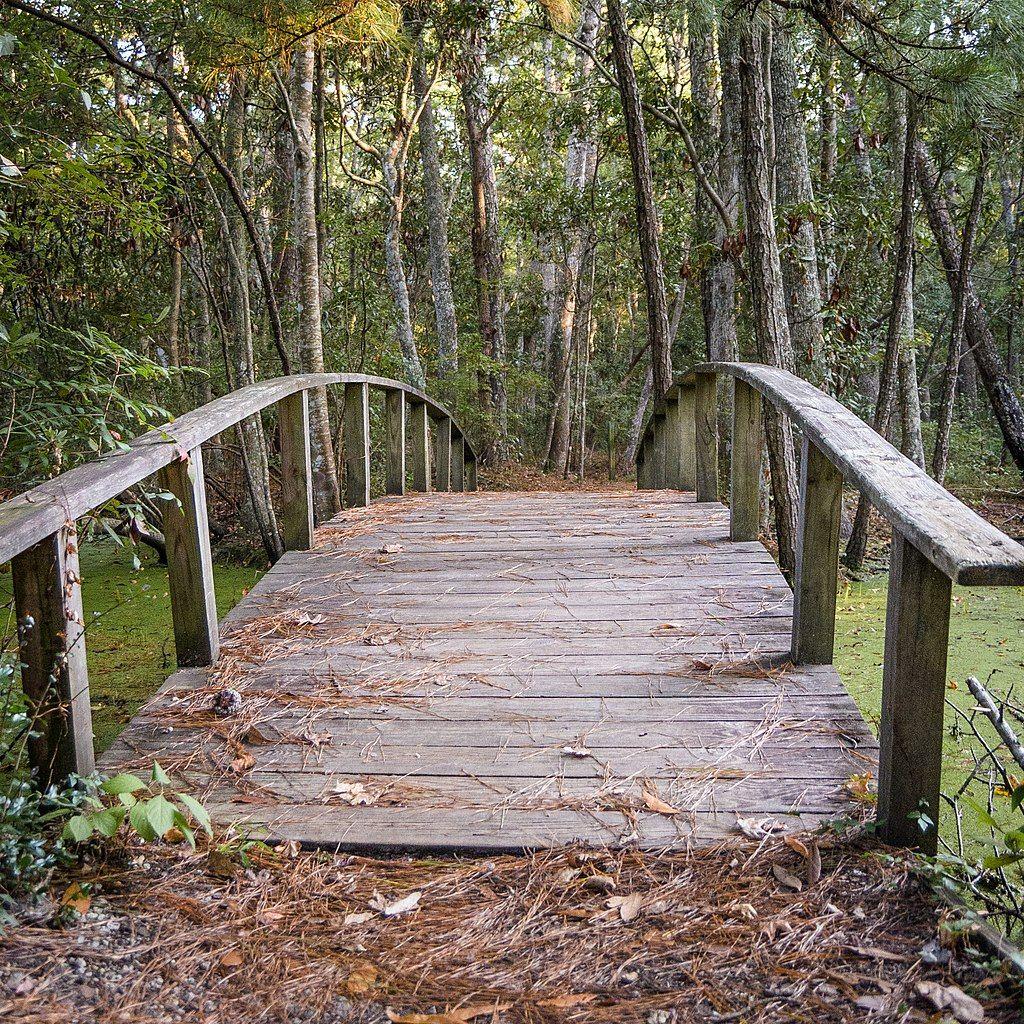 A Wooden Bridge in Nags Head Woods Preserve