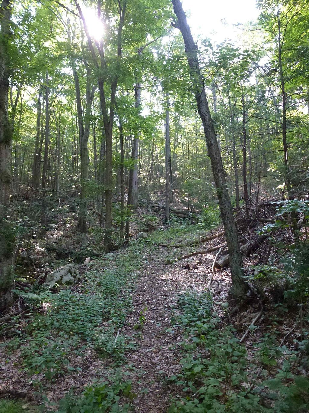View of Wooster Mountain State Park