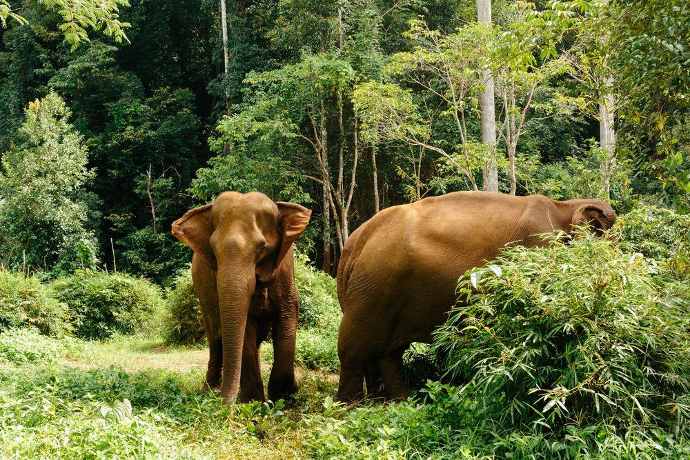 Elephants at Elephant Valley Project
