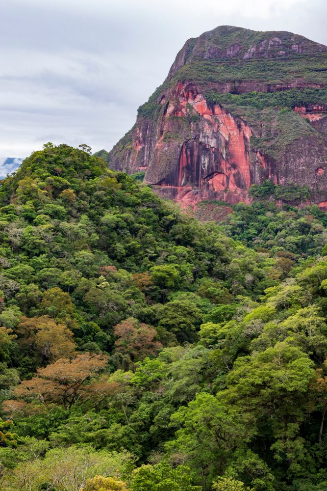 Forests of Amboró National Park
