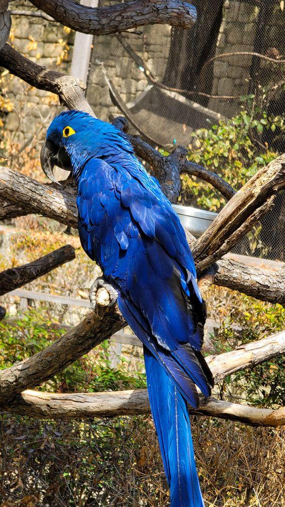 Bird at Fort Worth Zoo