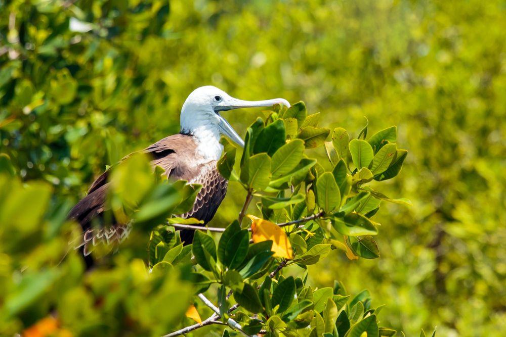 Bird in Isla Contoy National Park