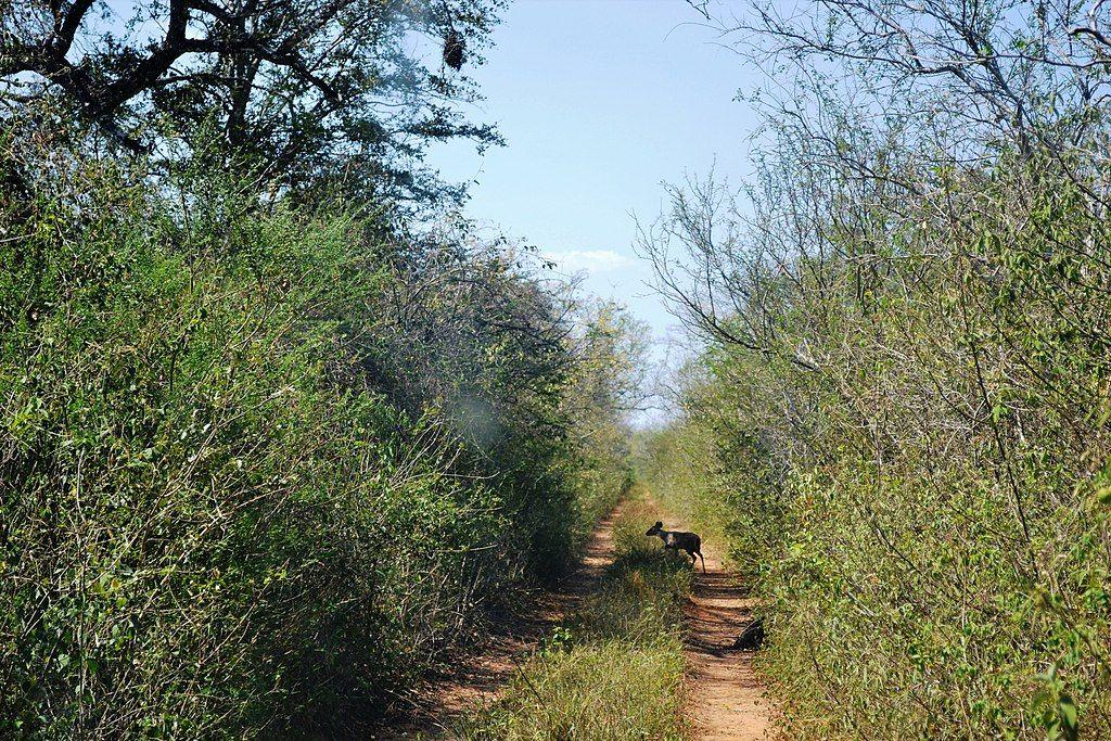 Kaa-Iya del Gran Chaco National Park