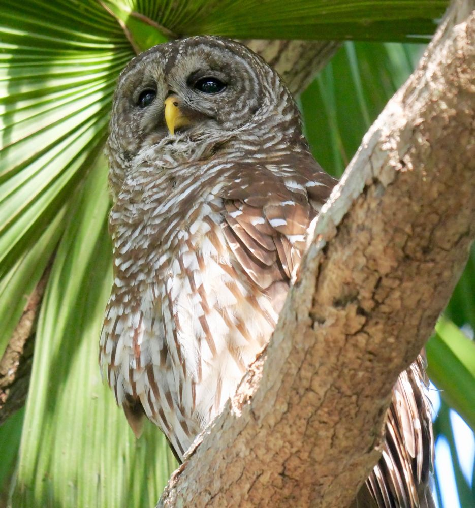 Owl in Mead Botanical Gardens