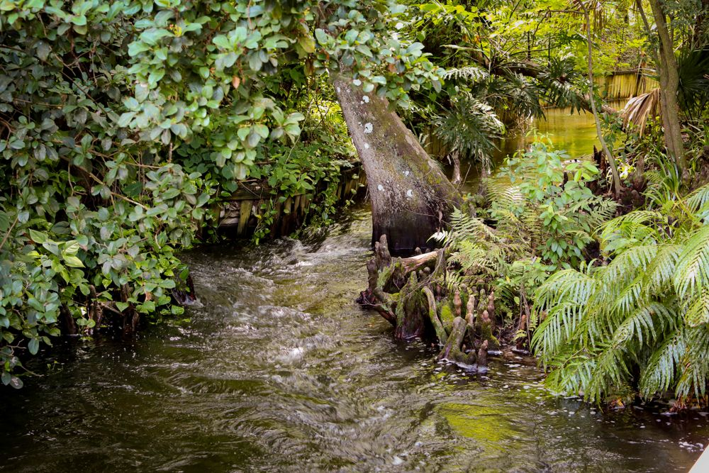 Stream in Mead Botanical Gardens