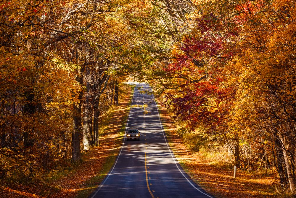 Skyline Drive during fall
