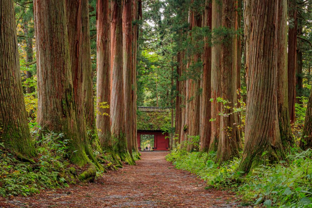 Entry way to Togakushi Jinja Shrines