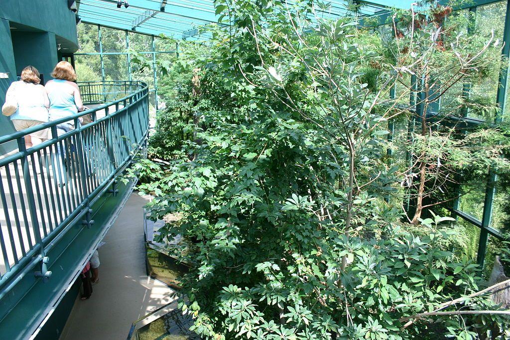 Cypress swamp Exhibit at Virginia Living Museum